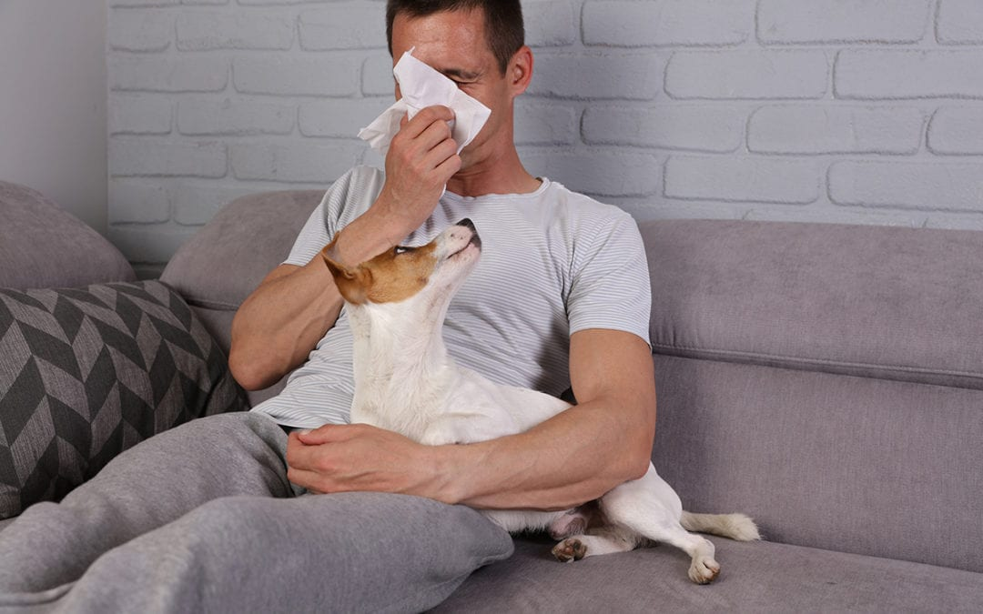 Home Air Purification Combats Allergies, Viruses