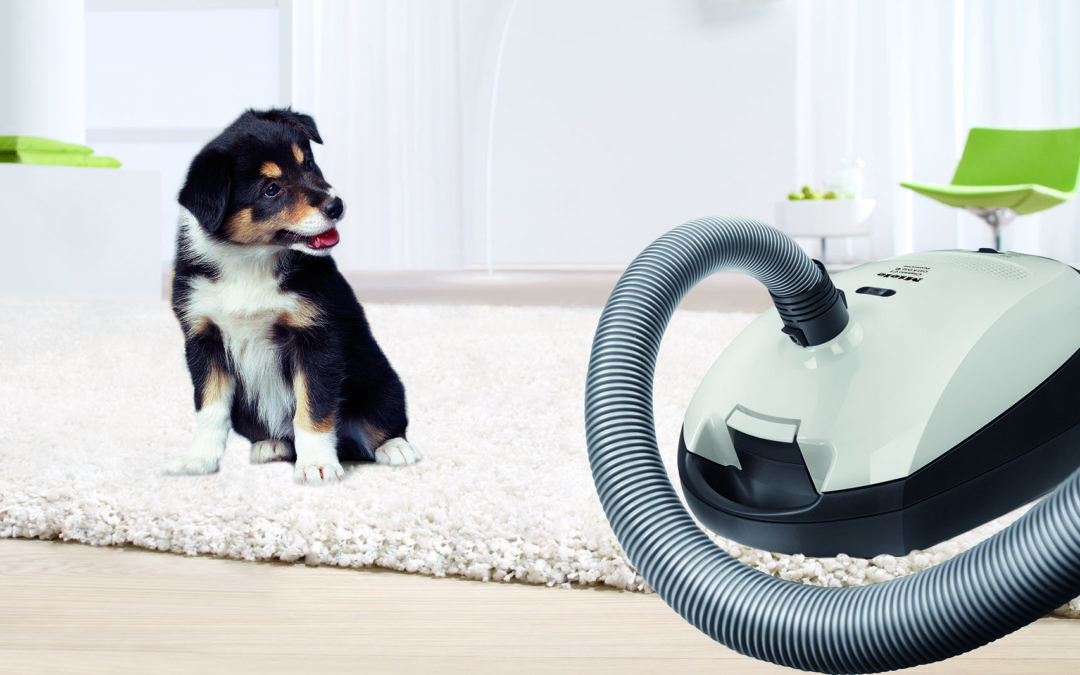 Five Ways to a Cleaner Cat and Dog Home