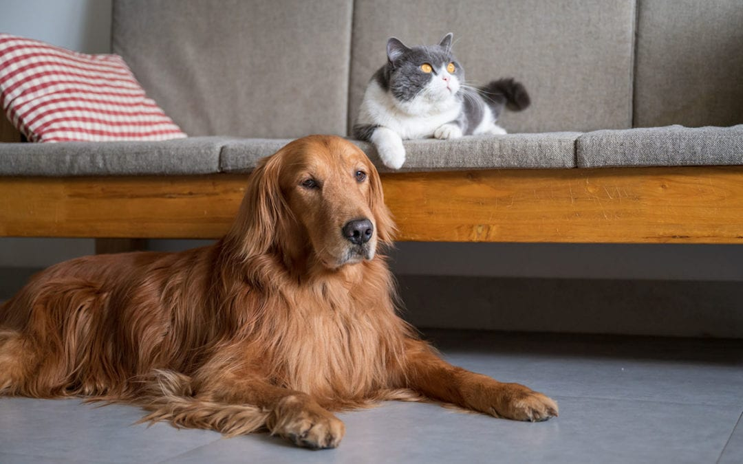 Pet Owner Tips for Buying the Right Vacuum