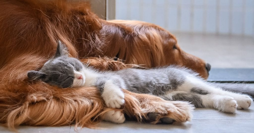 Dog and cat sleeping peacefully together