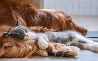 Making your Home Safe for your Pets
